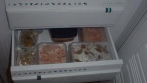 penyimpanan-makanan